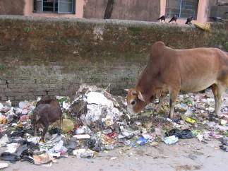 India 2006 bodhgaya,nalanda,rajhagria 066