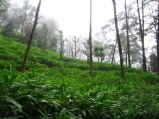 India 2006 bodhgaya,nalanda,rajhagria 070